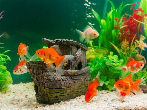 Peixes coloridos em um aquário