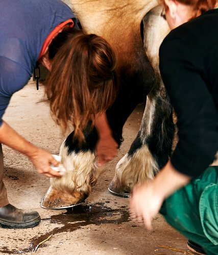 tétano em cavalos: sintomas