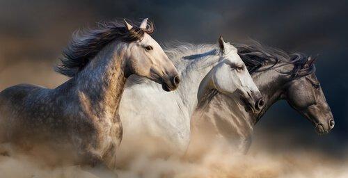 Tétano em cavalos: sintomas e tratamento