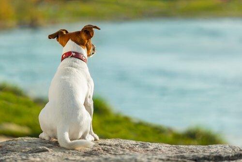 Cachorro com a cauda relaxada