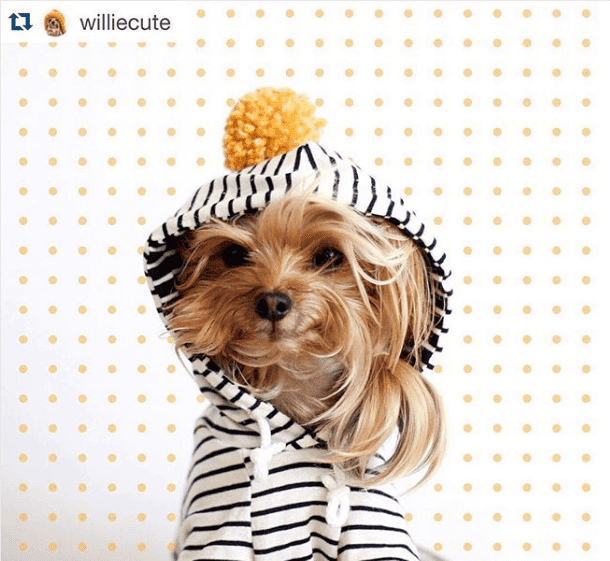 Willie Cute: perfil no Instagram