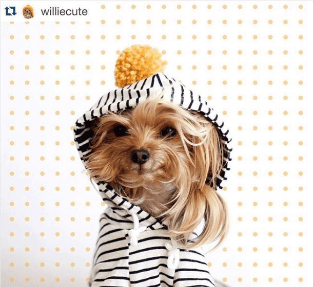 Willie Cute: perfil no Instagram