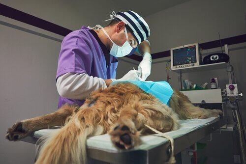 processo da biópsia canina