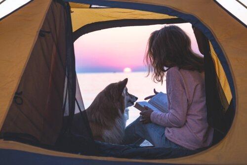 Acampar com cachorro