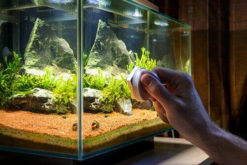 Acessórios para o seu aquário