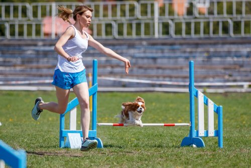 Cachorro fazendo exercícios
