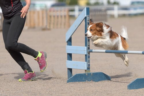exercícios de agilidade para cachorros
