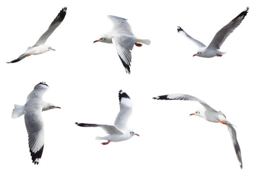 gaivota: habitat