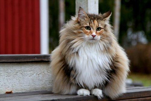 dicas de alimentação para gatos de pelo longo