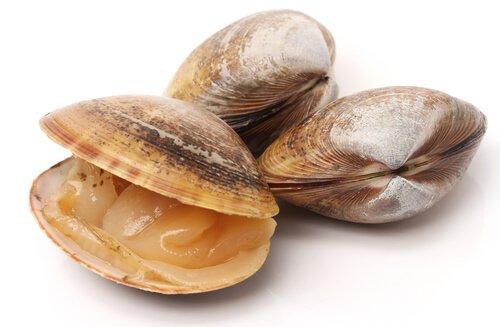 Tipos de moluscos: conheça alguns deles
