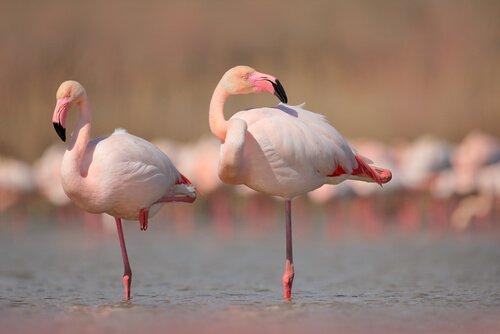 animais que vivem em lagoas