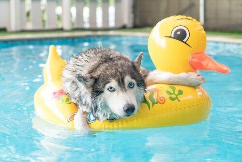 Dicas para brincar com seu animal de estimação no verão