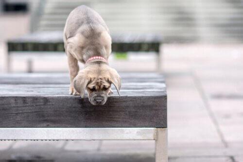 Cães com medo de altura?
