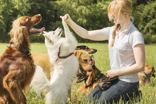 Cães resolvem problemas mais rápido quando seus donos os incentivam