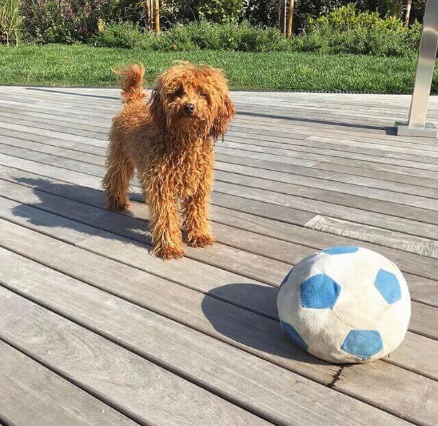 Cachorrinho com bola