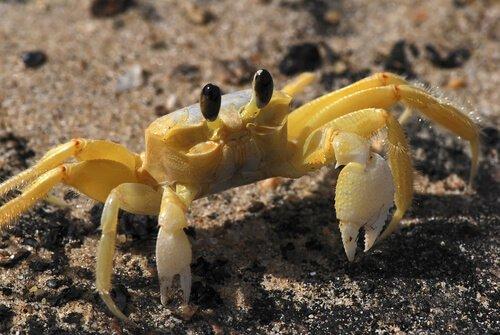 4 espécies de caranguejos marinhos