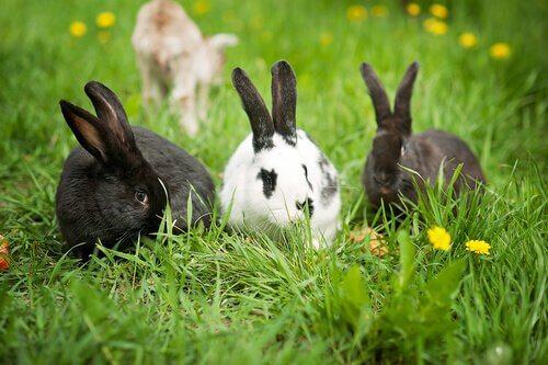 animais que comem flores: coelhos
