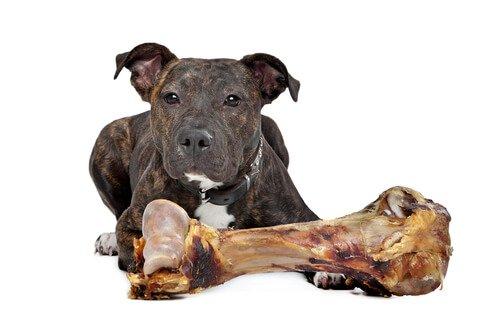 alimentação de cães molossos