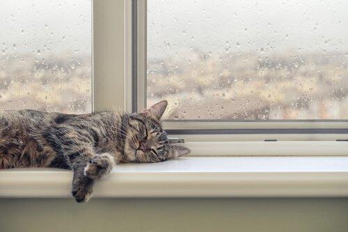 Como o seu gato age durante a chuva?