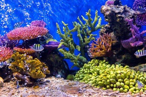 Cuide do seu aquário se for sair de férias