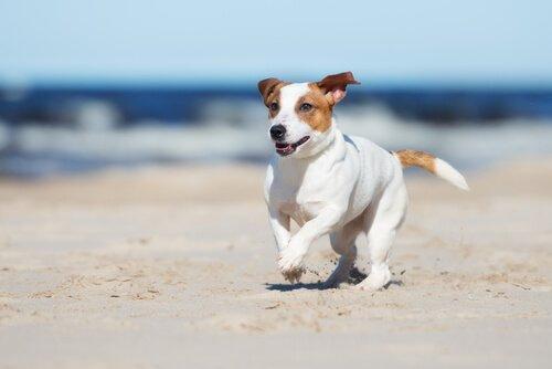 Dicas para ir à praia com seu cão