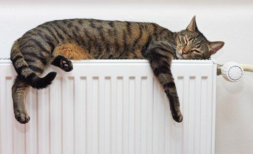 Gato dormindo sobre aquecedor