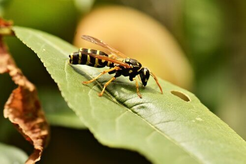 vespa sobre uma folha