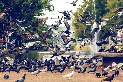 Doenças transmitidas por pombos