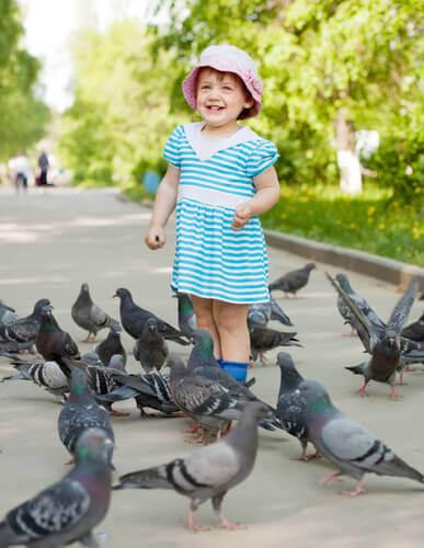 algumas doenças transmitidas por pombos