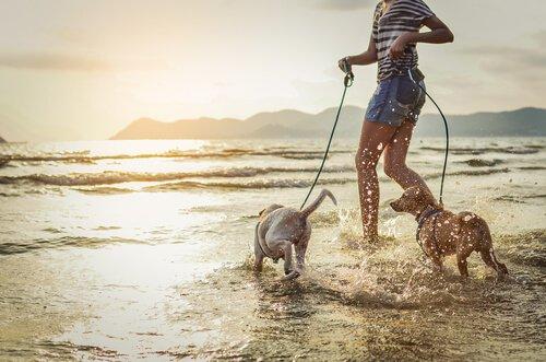 Dona na praia com cachorros