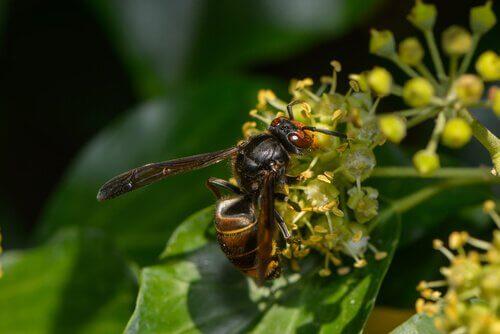 5 espécies de vespas