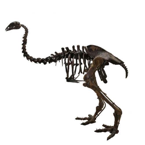 Fósseis do pássaro elefante: uma ave extinta de Madagascar
