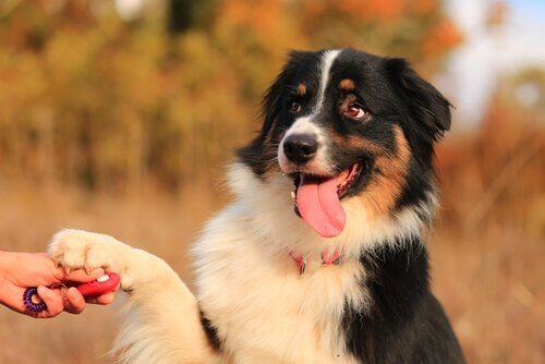Atividades para exercitar e educar seu animal de estimação
