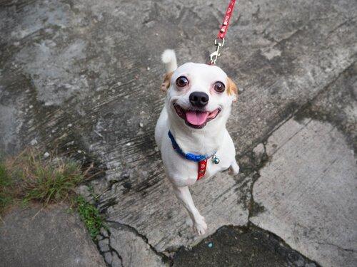 6 dicas para tornar a caminhada do seu cão mais divertida