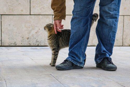 Informações sobre feromônios felinos