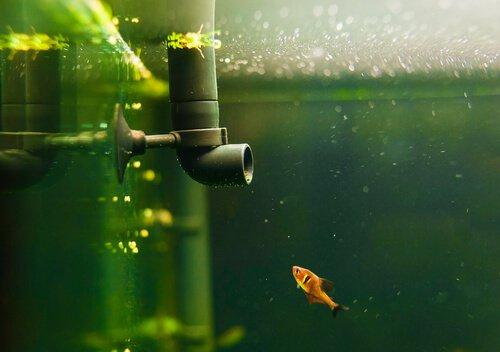 Aquário com filtro e peixe dourado
