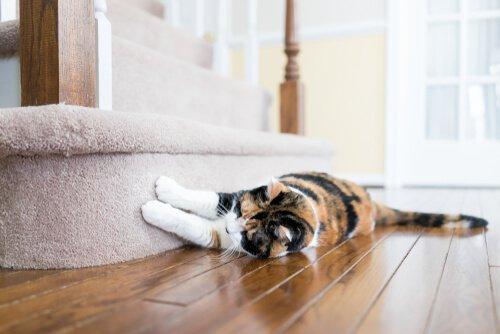 Gato arranhando sofá