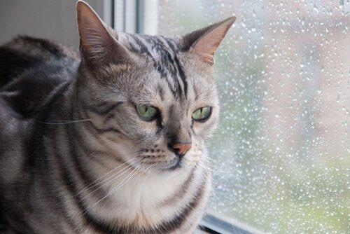 Gatos e água
