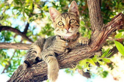 Gatinho em galho de árvore