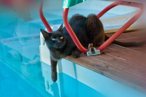 Seu gato pode tomar banho de piscina?