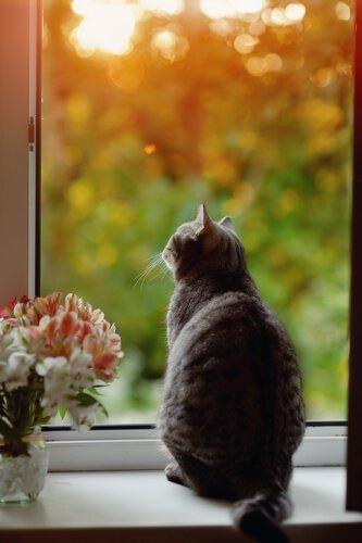Gatinho olhando pela janela