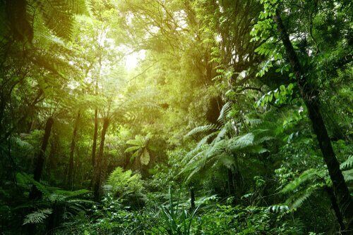 Conheça a temperatura e condições de vida na selva