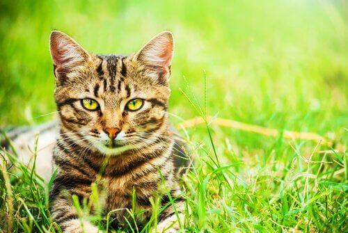 quantos anos vive um gato