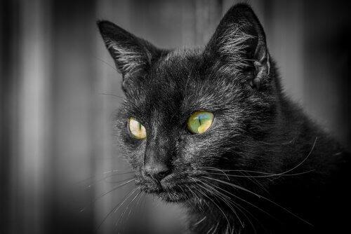 Informações sobre os olhos dos gatos