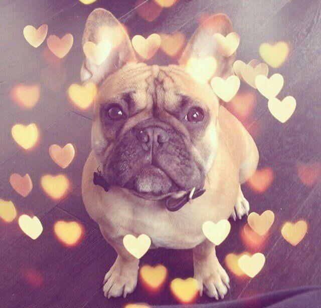 perfis do instagram sobre cães cães mais famosos 3