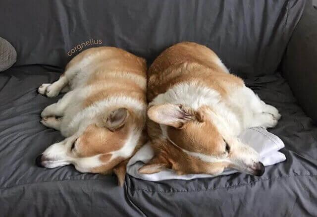 perfis do instagram sobre cães cães mais famosos 4