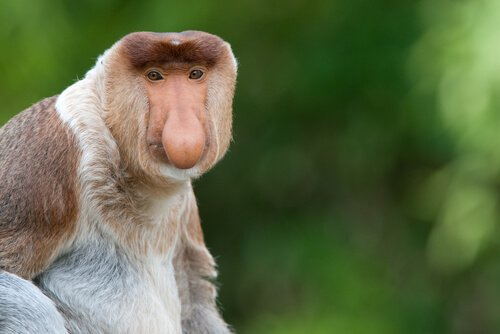 As mais curiosas espécies de macacos