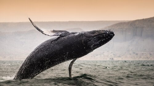 Qual é a maior baleia? Venha descobrir!