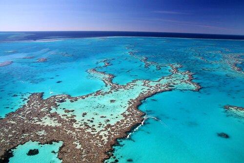 dicas para mergulhar em um recife de corais