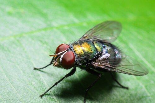 Por que há mais moscas no verão?